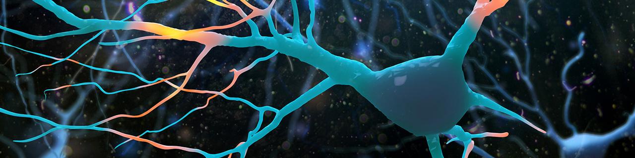 illustration of nerve cells