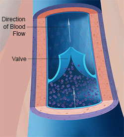 illustration of a vein and a valve