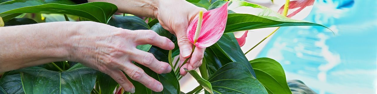 woman with arthritic hands gardening